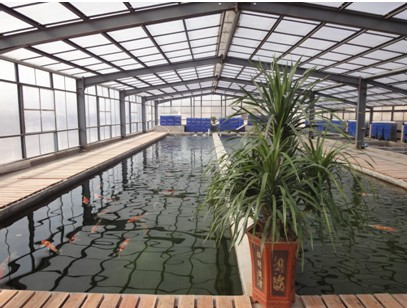 锦鲤渔场鱼池过滤设计,鱼池设计建造方案服务