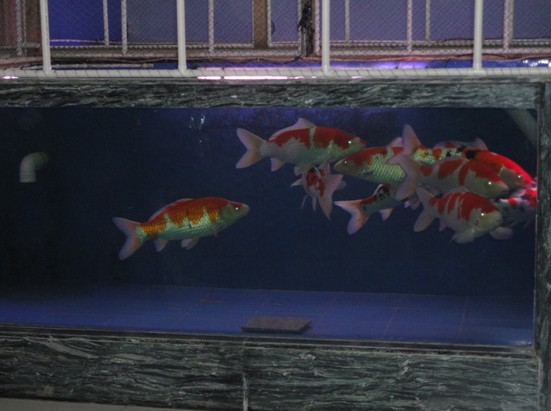 鱼池生化过滤系统设计服务,包括鱼池设计,鱼池过滤池的设计,渔场整体